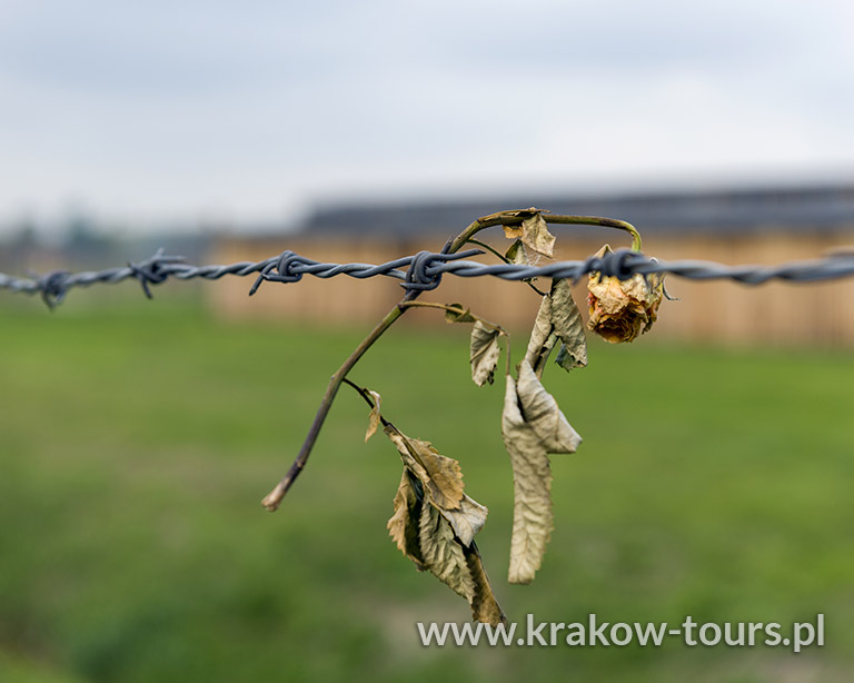 P2. KL Auschwitz Birkenau Private Tour